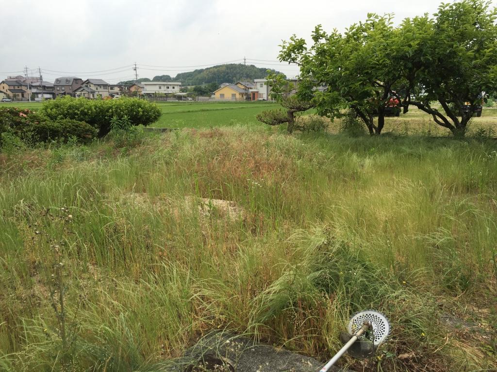便利屋日報|東郷町にて草刈りを行いました〜!!