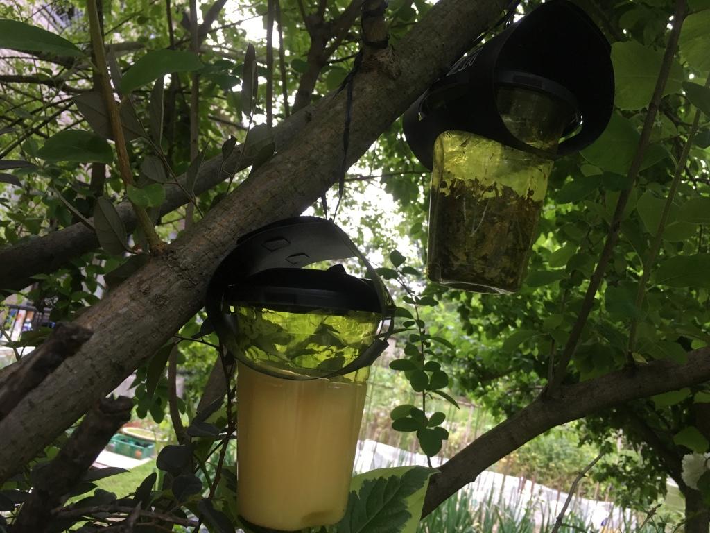 便利屋日報|『日進市のとってもお洒落なガーデニング会社にて防蜂対策と庭木のをしてきました。