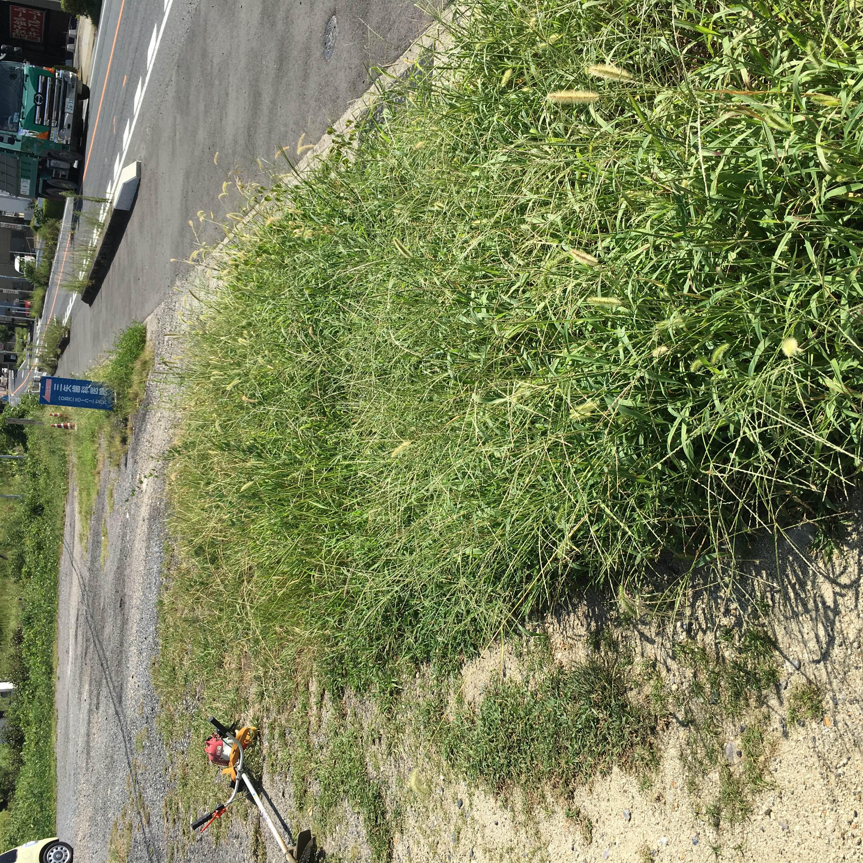 便利屋日報 東郷町の三矢歯科医院様にて草刈りを行いました〜!